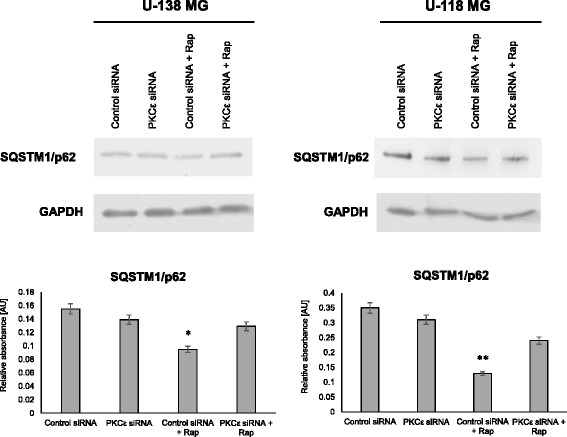 Modulation SQSTM1/p62 after PRKCE silencing and rapamycin treatment. a U-138 MG and b U-118 MG cells were transfected for 72 h with PKCε siRNA (PKCε siRNA) and non-targeting siRNA (Control siRNA) and then were treated for 24 h with rapamycin (300 nM). GAPDH was used as a loading control and as an internal standard. Representative blots are shown. The densitometric analysis represents means ±SD of three independent experiments. * P