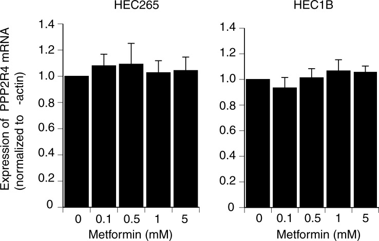 Effects of metformin on PPP2R4 mRNA levels in vitro . HEC 265 and HEC 1B were seeded in 6-well plates (50,000 cells/well) in Dulbecco's modified Eagle's medium containing 10% fetal bovine serum. At 80% confluency, the cells were treated with increasing doses (0.1–5 mM) of metformin for 24 h. There were no significant changes in the expression of PPP2R4 compared with the control at any concentration of metformin in either endometrial cancer cell line. The results are presented as the mean ± standard deviation for three independent experiments.