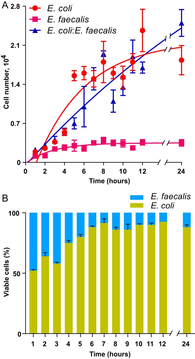 Growth of E. coli and E. faecalis in single- or double-species cultures. (A) Growth rates of static E. coli and E. faecalis single-species cultures (red and magenta dots, respectively) and of mixed E. coli - E. faecalis cultures (blue dots). (B) Composition of static E. coli - E. faecalis biofilm cultures during the first 24 h of incubation. Means of three independent experiments are shown; error bars indicate standard deviations.