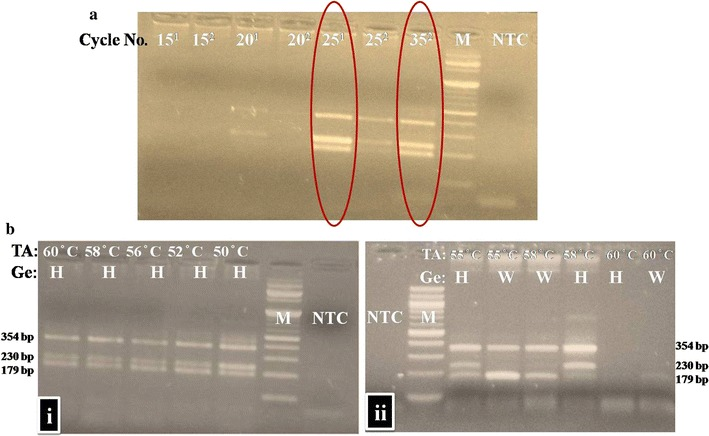 Comparison of SD polymerase and <t>Taq</t> DNA polymerase with respect to amplification efficiency ( a ) and influence of annealing temperature ( b ). a Superscript 1: <t>T-ARMS</t> PCR with SD polymerase. Superscript 2: T-ARMS PCR with Taq DNA polymerase. M molecular ladder of 100 bp, NTC no template control. b (i) SD polymerase at various TA on heterozygous (H) genotype (ii) Taq DNA Polymerase at various TA on heterozygous (H) and Wild (W) genotypes (Ge) in presence of DMSO (5%). M 100 bp ladder, NTC non-template control