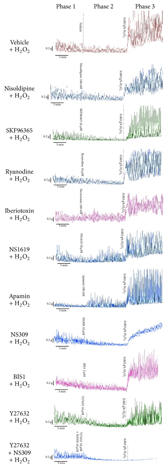 Representative tracings of spontaneous contractions of intact rat bladder strips before (Phase 1) and during (Phase 2) treatment with vehicle (0.1% DMSO) or test agent [nisoldipine (100 nM), SKF96365 (10 μ M), ryanodine (10 μ M), iberiotoxin (100 nM), NS1619 (30 μ M), apamin (100 nM), NS309 (10 μ M), Y27632 (10 μ M), BIS-1 (2 μ M), and Y27632 + NS309 (each 10 μ M)] and then incubated with 0.003 g% H 2 O 2 (Phase 3).