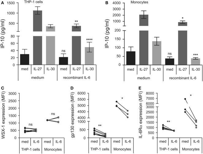 Recombinant IL-6 inhibits IL-27- and IL-30-IP-10 production. (A) THP-1 cells and (B) primary human monocytes were pretreated with recombinant IL-6 (10 ng/mL) for 30 min and then treated with or without recombinant IL-27 (50 ng/mL) or IL-30 (50 ng/mL) for 24 h. IP-10 production was measured in cell-free supernatants by ELISA. Data presented are the mean ± SEM of 13 different THP-1 experiments or 6 different monocyte donors. THP-1 cells and primary human monocytes were stimulated with or without recombinant IL-6 (10 ng/mL) for 30 min and then stained with IL-27 receptor α/T cell cytokine receptor (WSX-1) (C) , glycoprotein 130 (gp130) (D) , or anti-IL-6Rα (E) . Mann–Whitney U tests were used for statistical analyses between corresponding medium controls and IL-6 pretreated THP-1 cells. Wilcoxon signed-rank matched pair tests were used for statistical analyses between corresponding medium controls and IL-6 pretreated primary monocytes. ns, not significant; * p ≤ 0.05; ** p ≤ 0.01; *** p ≤ 0.001; **** p ≤ 0.0001.