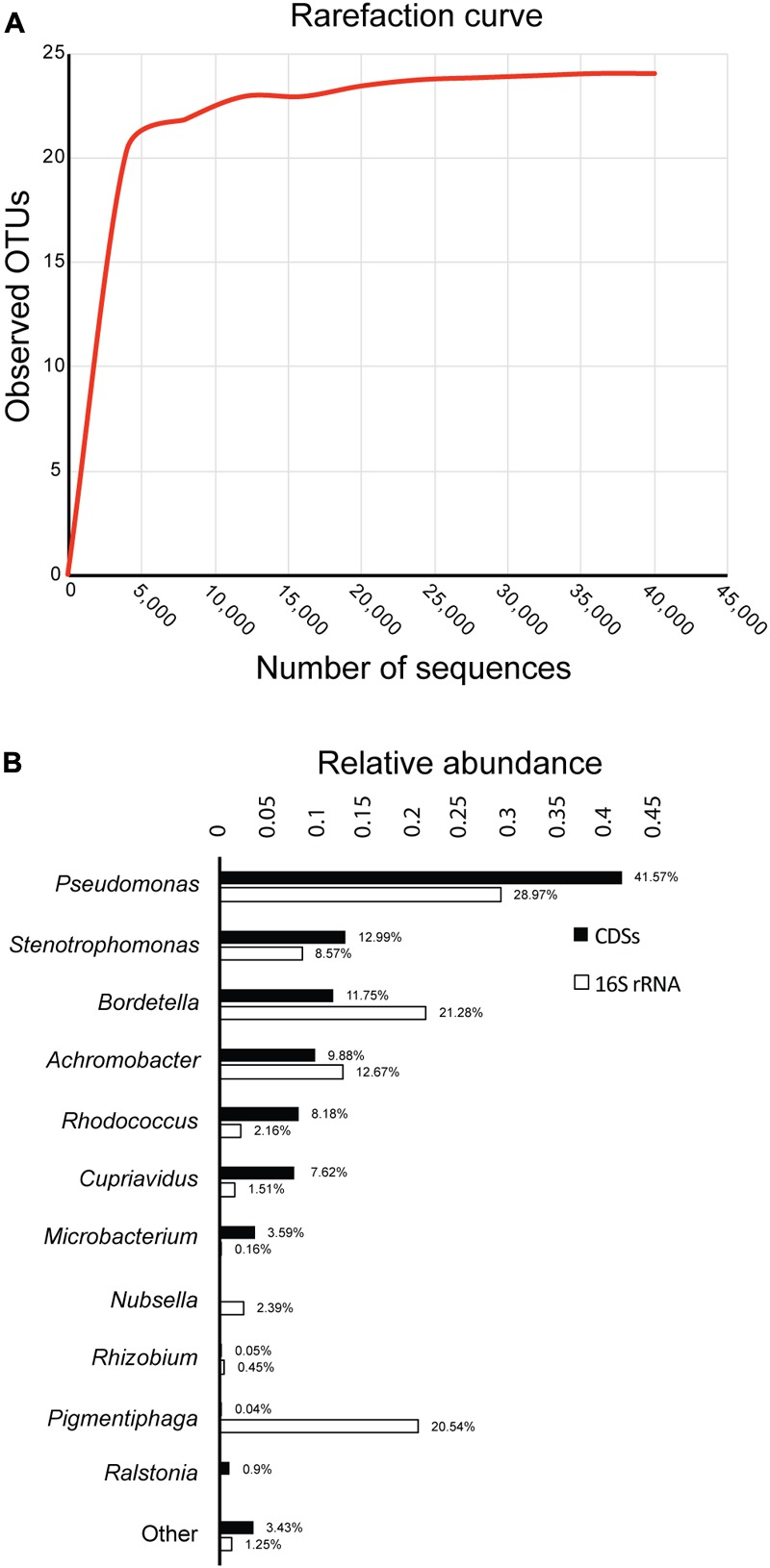 Diversity and composition of the biphenyl-degrading consortium. (A) Rarefaction curve of observed OTUs (≥97% sequence identity) over the number of 16S rRNA sequences and (B) relative abundance of genus based on 16S rRNA and CDSs taxonomic assignment. Only taxa with a minimum relative abundance of 0.15% for 16S rRNA and 0.9% for CDSs is represented.