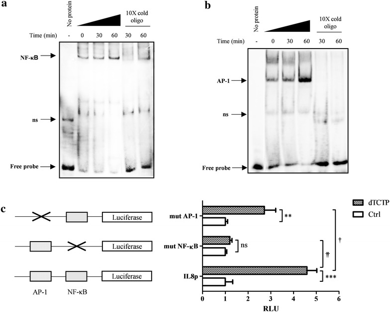 The role of NF-κB and AP-1 in dTCTP-induced IL-8 production. Electrophoretic mobility shift assays to measure the DNA-binding activities of NF-κB ( a ) and AP-1 ( b ) binding to their recognition sites were performed. Nuclear extracts were prepared from the BEAS-2B cells stimulated with 10 μg/ml of dTCTP for various time periods (0, 30 and 60 min). EMSA was performed using nuclear extract binding buffer (100 mm Tris, 500 mm KCl and 10 mm DTT; pH 7.5), and biotinylated probes were incubated at room temperature for 20 min. The protein–DNA complexes were electrophoresed on 6% polyacrylamide gels at 4 °C in ×0.5 TBE buffer and transferred to a nylon membrane. The UV cross-linked membrane was treated with streptavidin–horseradish peroxidase conjugate and then detected with CCD camera imaging device using the LightShift Chemiluminescent EMSA Kit. Unlabelled oligonucleotides were included to examine binding specificity. c Schematic presentation of IL-8 promoter luciferase reporter system and two mutant IL-8 promoters with an altered NF-κB or AP-1 binding site (left panel). Luciferase activities of BEAS-2B cells carrying IL-8 promoter reporter plasmids were measured using dual luciferase assay system. BEAS-2B cells were transiently transfected by Lipofectamine™ 2000 reagent with 1 μg of each IL-8 luciferase plasmids and 0.1 μg of pRL-TK. At 24 h after transfection, the cells were stimulated for 24 h with dTCTP (10 μg/ml). Values are expressed as fold changes (mean ± SEM, n = 3). **p