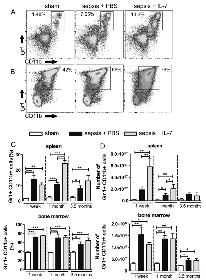 Sepsis results in a sustained expansion of MDSCs. Mice were injected with PBS i.p. (Sham) or subjected to sepsis induction. IL-7 (Sepsis + IL-7) or PBS (Sepsis + PBS) was injected daily for 5 days from day 5–9 post sepsis induction. Gr1 + CD11b + cells from the spleen and bone marrow were analysed 1 week, 1 month and 3.5 months after sepsis induction. (A, B) Representative flow cytometry images from spleen (A) and bone marrow (B) from analysis after 3.5 months. (C) Frequency of Gr1 + CD11b + cells among total spleen cells (top) and among total bone marrow cells (bottom). (D) Number of Gr1 + CD11b + cells in spleen (top) and bone marrow (bottom). n = 6–9 (1 week), 5–12 (1 month), 8–20 (3.5 months). * P