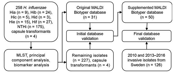 Culture collections and methods used in this study for capsule typing of Haemophilus influenzae by MALDI-TOF mass spectrometry. An evaluation set of H. influenzae isolates of all capsule types from diverse geographic origins and time periods and isogenic capsule transformants ( 30 ) were used to investigate capsule type-specific differences in MALDI-TOF mass spectra. MLST was used to ensure adequate coverage of different genetic lineages of encapsulated H. influenzae . Reference isolates from the evaluation set (encapsulated and nonencapsulated) were selected to construct a new typing database in MALDI Biotyper. This database was tested with the remaining isolates in the set, and misclassified isolates were added to the database. The final supplemented database was blindly validated with a second culture collection that consisted of clinical invasive isolates. Hia, H. influenzae type a; Hib, H. influenzae type b; Hic, H. influenzae type c; Hid, H. influenzae type d; Hie, H. influenzae type e; Hif, H. influenzae type f; MALDI-TOF, matrix-assisted laser desorption/ionization time-of-flight; MLST, multilocus sequence typing; NTHi, nontypeable H. influenzae.