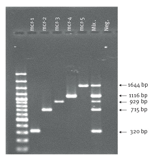 Multiplex PCR for detection of mcr-1, mcr-2, mcr-3, mcr-4 and mcr-5 , European Union Reference Laboratory for Antimicrobial Resistance (EURL-AR) in the context of animal health and food safety, 2017