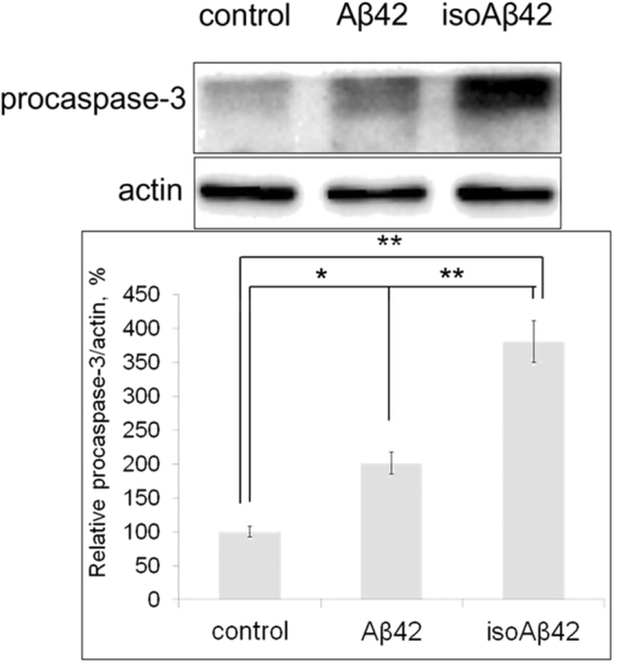 Effects of Aβ42 and isoAβ42 (10 μM, 6 h) treatment on procaspase 3 levels in SH-SY5Y cells. After peptide treatment, the cells were lysed, the isolated proteins were separated by SDS-PAGE, caspase 3 and actin were detected by Western blot using the appropriate antibodies. The bars represent procaspase 3 expression changes. Each value represents the mean ± SD of at least three independent experiments; *p