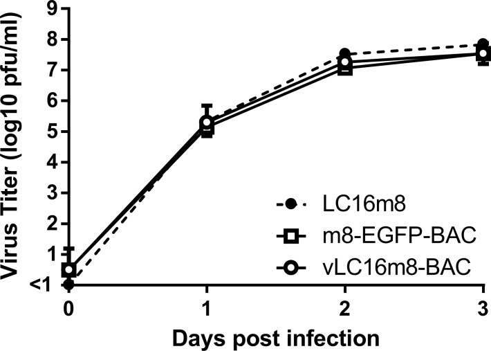 Growth of the recovered virus from <t>pLC16m8-BAC</t> named vLC16m8-BAC. RK13 cells were infected with either authentic m8, <t>m8-EGFP-BAC,</t> or vLC16m8-BAC at an MOI of 0.01. The infected cells along with the culture media at the indicated d.p.i. were collected and freeze-thawed. The amount of the virus was determined by a standard plaque assay.