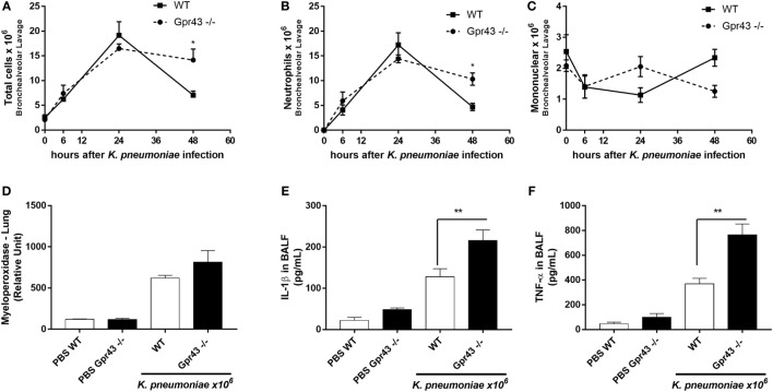 The onset of inflammatory cells in the lung of Gpr43 −/− mice 48 h after Klebsiella pneumoniae infection. (A) Number of total cells infiltration, (B) neutrophils, and (C) mononuclear cells in airway spaces recovered using bronchoalveolar lavage (BAL) were counted at different time points (0–48 h) after intratracheal inoculation of 1 × 10 6 CFU of Kp . (D) Myeloperoxidase activity in homogenized lungs harvested from wild-type and Gpr43 −/− mice. (E) IL-1β levels and (F) TNF-α levels were measured by ELISA in BAL supernatant harvested from wild-type and Gpr43 −/− mice 48 h after Kp infection. Results are presented as mean ± SEM ( n = 6). *Statistical difference ( P