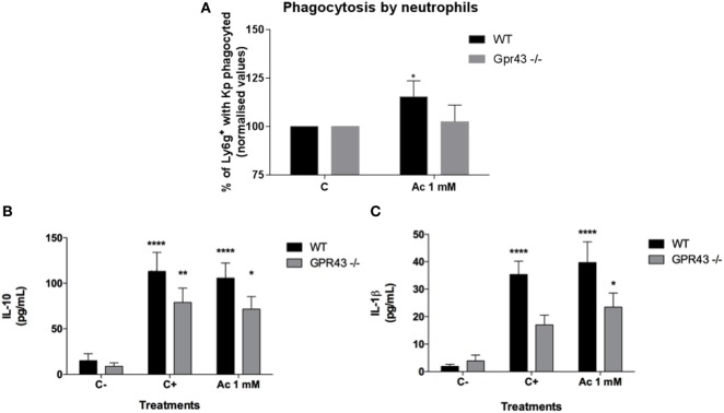 In vitro neutrophils analyses of phagocytosis and cytokines production after Klebsiella pneumoniae ( Kp ) exposure. (A) Bone marrow neutrophils from wild type and Gpr43 −/− were incubated with opsonized-pHRodo-marked Kp (MOI 1:1) and acetate (1 mM) for 120 min. Samples were analyzed by flow cytometer, and the mean fluorescence of bacteria within the cells were analyzed. (B) IL-10 and (C) IL-1β were measured in supernatant from neutrophils by ELISA. Results are presented as mean ± SEM ( n =6). C− = without bacteria C+ = with bacteria. *Statistical difference ( P