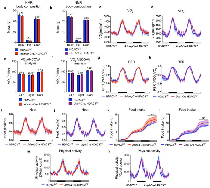 Metabolic studies of Adiponectin -Cre and Ucp1 -Cre HDAC3 KO mouse models a–b NMR analysis of body composition, (a) Adipoq- Cre mice versus control littermates (n= 8, 11) , (b) Ucp1- Cre mice versus control littermates (n= 7, 9). c–n , CLAMS metabolic cage analysis. c–d Oxygen consumption (VO 2 ), (c) Adipoq -Cre HDAC3 KO vs. control littermates (n= 6, 5), (d) Ucp1 -Cre HDAC3 KO vs. control littermates (n= 6, 6). e–f ANCOVA VO 2 analysis (linear regression analysis of total body mass and oxygen consumption) (e) Adipoq -Cre HDAC3 KO vs. control littermates (n= 6, 5) , (f) Ucp1 -Cre HDAC3 KO vs. control littermates (n= 6, 6). g–h Respiratory Exchange Ratio (RER), (g) Adipoq -Cre HDAC3 KO vs. control littermates (n= 6, 5), (h) Ucp1 -Cre HDAC3 KO vs. control littermates (n= 6, 6). i–j Heat measurements (kcal/hr), (i) Adipoq -Cre HDAC3 KO vs. control littermates (n= 6, 5). (j) Ucp1 -Cre HDAC3 KO vs. control littermates (n= 6, 6). k–l Food Intake, (k) Adipoq -Cre HDAC3 KO vs. control littermates (n= 6, 5), (l) Ucp1 -Cre HDAC3 KO vs. control littermates (n= 6, 6). m–n Physical activity, (m) Adipoq -Cre HDAC3 KO vs. control littermates (n= 6, 5), (n) Ucp1 -Cre HDAC3 KO vs. control littermates (n= 6, 6). P -values shown in italics. CLAMS data is graphed as rolling averages. NS, not significant, * P