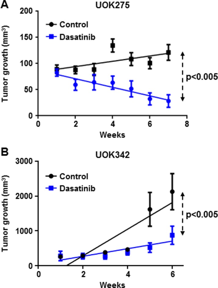 Dasatinib inhibits NF2 -deficient tumor growth in two xenograft animal models ( A ) Twenty female athymic nude mice were injected subcutaneously with 2 million of UOK275 cells. When the tumor volumes reached > 80 mm 3 , mice were randomized into 2 groups. One group was treated with dasatinib (25 mg/kg week days by oral gavage) while the other group received the vehicle (water/PEG 1:1) in a similar manner. Tumor volumes were measured once a week using calipers. Tumor volume was estimated using the formula v = lxL 2 . ( B ) Twenty female athymic nude mice were injected with 2 million of UOK342 cells. When the tumor volumes reached > 100 mm 3 , mice were randomized into 2 groups treated either with dasatinib (25 mg/kg week days by oral gavage) or the vehicle (water/PEG 1:1). Tumor volumes were measured using calipers once a week. Tumor volume was estimated using the formula v = lxL 2 .