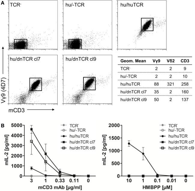 Surface expression of a functional armadillo Vδ2 T cell receptor (TCR) chain. (A) Armadillo Vδ2 TCR chains (pMSCV-IRES-mCherry FP armadillo Vδ2 cl7 or cl9) were retrovirally transduced into TCR-negative murine cell lines (BW58 r/mCD28). The human Vγ9 TCR MOP chain (pEGN huVγ9, GenBank: KC170727.1) was co-transduced and TCR surface expression was confirmed with flow cytometry stainings of the human Vγ9 chain, Vδ2 chain, and mouse CD3. Dotplots of Vγ9 ( Y -axis, log) and CD3 ( X -axis, log) co-stainings are shown and geometric means of Vγ9, Vδ2, and CD3 stainings are indicated. (B) BW58 r/mCD28 cells and TCR transductants were cultured for 22 h in 96-well plates coated with α-mCD3 mAb or with RAJI-RT1B 1 cells in the presence of increasing amounts of HMBPP. Mean + SEM of three independent experiments is shown for each cell line. Stimulation of hu/huTCR with 10 µg/ml α-mCD3 mAb resulted in 651 pg/ml (SEM: 129).