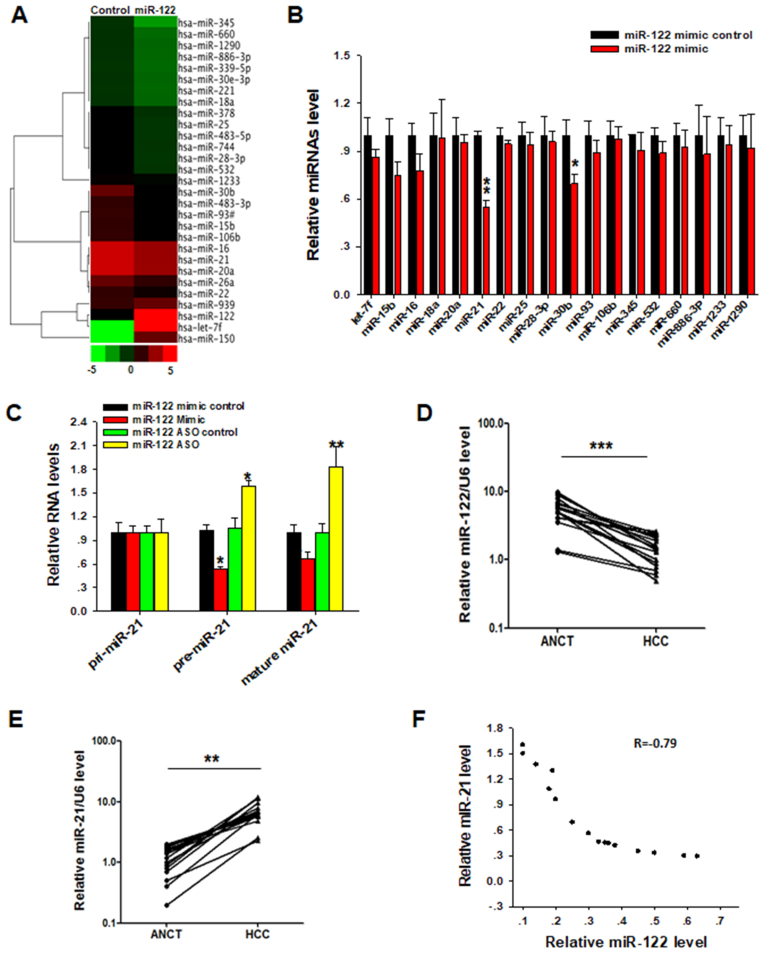 Nuclear miR-122 inhibits miR-21 biogenesis. ( A ) TaqMan Low Density Array screening for target miRNAs of miR-122. Huh-7 cells were transfected with miR-122 mimic or control oligonucleotide and then harvested 24 h after transfection. The miRNA expression profile was sorted using a hierarchical clustering method (Cluster 3.0 and Java TreeView). Twenty eight most significantly changed miRNAs were shown in the cluster. ( B ) RT-qPCR validation of decreased miRNAs screened by Low Density Array following ectopic expression of miR-122 mimic or control. ( C ) Relative pri-miR-21, pre-miR-21 and miR-21 expression levels in Huh-7 cells after miR-122 overexpression or depletion. ( D ) RT-qPCR analysis of expression levels of miR-122 in 16 paired HCC and ANCT tissue samples. ( E ) RT-qPCR analysis of miR-21 level in 16 paired HCC and ANCT samples. ( F ) Pearson's correlation scatter plot of the levels of miR-122 and miR-21 in 16 paired HCC tissues. The results are presented as the mean ± SD ( N = 3) of three independent experiments. * P