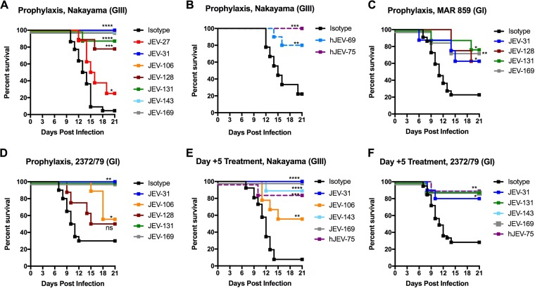 Protective efficacy of anti-JEV MAbs in mice. (A and B) Four- to 5-week-old male <t>C57BL/6</t> mice were passively administered 10 µg of the indicated (A) mouse or (B) human MAb via intraperitoneal injection 1 day prior to inoculation with 10 2 FFU of JEV-Nakayama via the subcutaneous route. JEV-31 ( n = 9), JEV-106 ( n = 8), JEV-143 ( n = 8), and JEV-169 ( n = 10) provided complete protection against lethality. JEV-27 ( n = 8), JEV-128 ( n = 9), and JEV-131 ( n = 9) provided partial protection compared to the isotype control MAbs. (C and D) Three-week-old male C57BL/6 mice were passively administered 10 µg of the indicated MAb as described above 1 day prior to inoculation with 10 3 FFU of (C) JEV-MAR 859 (JEV-31, n = 8; JEV-131, n = 9; JEV-169, n = 8) or (D) JEV-2372/79 (JEV-31, n = 9; JEV-106, n = 9; JEV-131, n = 9; JEV-169, n = 9). (E and F) Two hundred fifty micrograms of the indicated MAb was administered 5 days postinfection to (E) 4- to 5-week-old mice infected with 10 2 FFU of JEV-Nakayama (JEV-31, n = 9; JEV-106, n = 9; JEV-143, n = 9; JEV-169, n = 9; hJEV-75, n = 8) or (F) 3-week-old mice infected with 10 3 FFU of JEV-2372/79 (JEV-31, n = 10; JEV-131, n = 9; JEV-143, n = 9; JEV-169, n = 10; hJEV-75, n = 9). Data are pooled from at least two independent experiments. Survival was analyzed for each MAb compared to the isotype control MAb by the log rank test. *, P