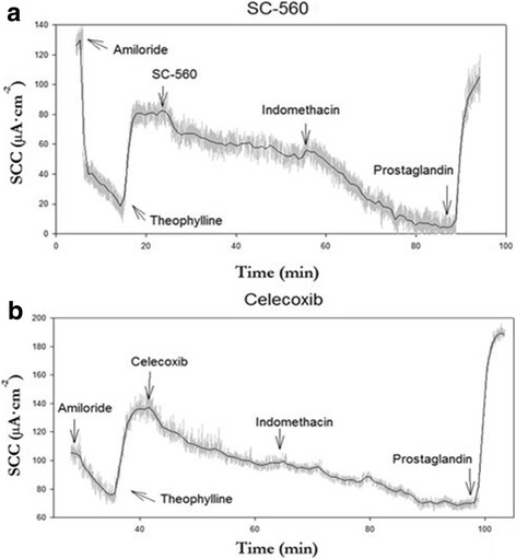 Examples of typical recording in Ussing Chamber experiments on short circuit current (SCC) following exposure to COX-1 (cyclooxygenase) inhibitor SC-560 ( a ) and COX-2 inhibitor celecoxib ( b ). Compounds were added to biopsies in the following concentrations: amiloride (20 μM, mucosal side), theophylline (400 μM, both sides), either COX-1 inhibitor (SC-560, 500 nM, both sides) or COX-2 inhibitor (celecoxib, 500 nM, both sides), indomethacin (13 μM, both sides) and prostaglandin (PGE 2 , 100 nM, serosal side)