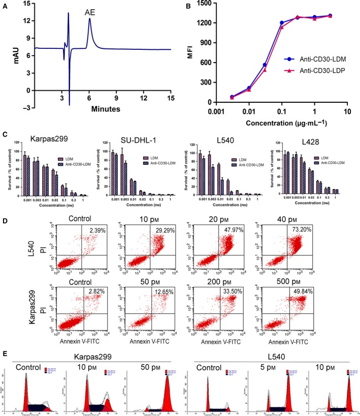 The characterization and in vitro activity of anti‐CD30‐LDM. (A) Reverse‐phase HPLC analysis of enediyne‐integrated anti‐CD30‐LDM using a Vydac C4 300A column at 340 nm. (B) Binding affinity of anti‐CD30‐LDM and anti‐CD30‐LDP to Karpas299 cells by FACS. (C) Cell viability assay. Karpas299, SU‐DHL‐1, L540, and L428 cell lines were treated with anti‐CD30‐LDM and LDM in a series of concentrations (0.001–1 n m ) for 48 h. Cell viability was tested by Cell Counting Kit‐8 (CCK‐8). Results are the mean values ± SD of three replicates. (D) Flow cytometry analysis of apoptosis of L540 or Karpas299 cells treated with increasing concentrations of anti‐CD30‐LDM for 24 h, respectively. (E) Cell cycle arrest assay of Karpas299 or L540 cells by flow cytometry. Cells were treated with indicated concentrations of anti‐CD30‐LDM for 24 h.