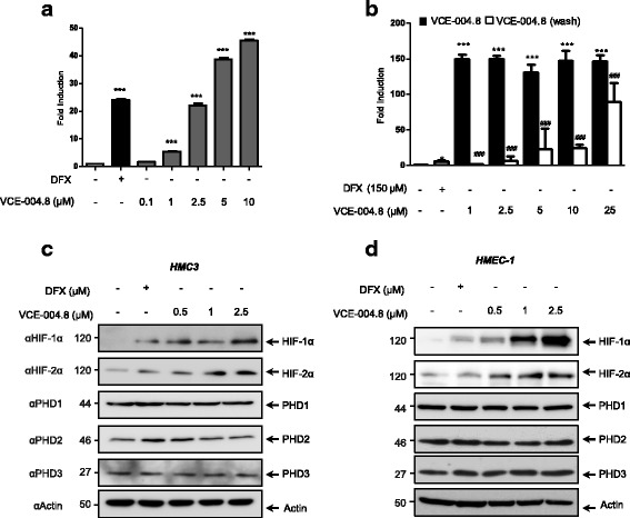 VCE-004.8 mediates HIF-1α stabilization. a NIH3T3-EPO-Luc cells were stimulated with VCE-004.8 at the doses indicated for 6 h and assayed for luciferase activity. b Cells were pre-treated with VCE-004.8 for 1 h and then washed or not with PBS and incubated in complete medium for 6 h. Fold induction relative to untreated cells is shown. Data represent the mean ± SD ( n = 5). *** p