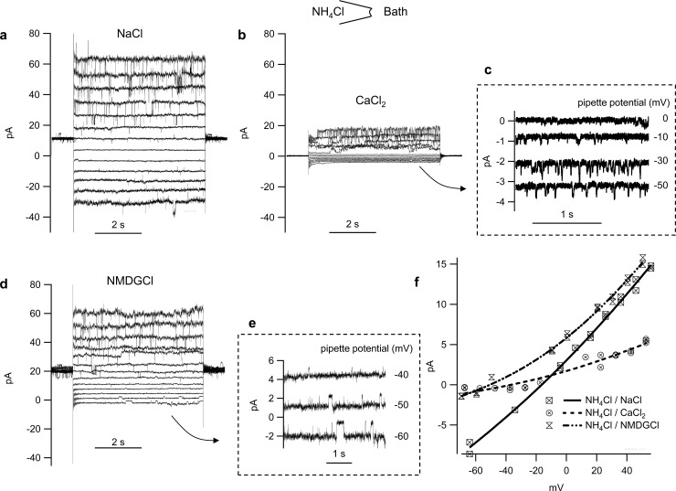 Original recordings of one patch from a bTRPV3 cell with NH 4 Cl in the pipette. a) Channel events are clearly visible in NaCl bath solution in response to pulse protocol III both at negative potentials and positive potentials, reflecting influx of Na +  and efflux of NH 4 + . b) same patch in 72.5 mmol∙l −1  CaCl 2  bath solution. Ca 2+  had a clear blocking effect on the current level at positive potentials (efflux of NH 4 + ). c) Detail from (b), showing single-channel events at negative potentials, reflecting influx of Ca 2+  d) same patch in NMDGCl bath solution. e) Insert showing single-channel events at negative potential level, suggesting influx of NMDG + . f) Current-voltage plot of unitary current amplitudes from this individual patch, fitted with the current formulation of the Goldman-Hodgkin-Katz equation. The fit yields a conductance for Na +  of 132 ± 4 pS, for Ca 2+  of 21 ± 3 pS, and for NMDG +  of 36 ± 3 pS. The conductance for NH 4 +  was similar in NaCl and NMDGCl solution (250 ± 3 pS or 264 ± 3 pS, respectively) but dropped to 88 ± 4 pS with high Ca 2+  in the bath.