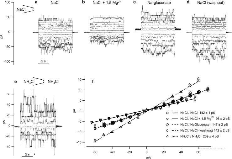 Inside-out measurements from cells expressing bTRPV3 in symmetrical solutions. Panels (a to d) show recordings from the same patch and identical scaling in a) symmetrical NaCl solution, b) NaCl solution with 1.5 mmol∙l  −1  MgCl 2 , c) Na-gluconate solution without MgCl 2  and d) return to symmetrical NaCl solution. The shift in the baseline at 0 mV pipette potential in (c) reflects the impact of the liquid junction potential. e) Patch from a second cell in symmetrical NH 4 Cl solution. For clarity, this graph only shows currents at every other voltage step of pulse protocol III. f) Current-voltage plot of the unitary current amplitudes of the data from (a to e) (linear fit).