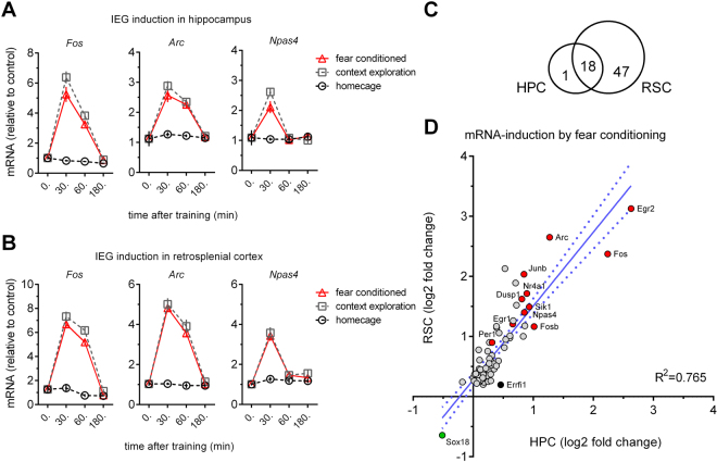 Gene-responses following cFC are highly correlated in hippocampus (HC) and retrosplenial cortex (RSC). ( A ) In HC, IEG mRNA levels ( Fos , Arc and Npas4 ) as detected by qPCR are strongly increased 30 mins (all three genes) and 1 hr ( Fos , Arc ) after cFC training, and return to baseline within 3 hrs. ( B ) The time-course of IEG induction observed in HC is recapitulated in RSC (n = 8 mice per group for HC and RSC). ( C ) Venn diagram showing the number of confirmed hits of two replicate RNAseq studies comparing mRNA expression in naïve and fear conditioned mice. All but one gene ( Errf1 ) found in HC are detected in RSC. ( D ) Correlation of mRNA induction by fear conditioning in HP and RSC. The gene-responses of the 66 confirmed hits in RSC and HC are highly correlated. The greater number of calls in RSC is explained by an overall larger gene-response in this structure.