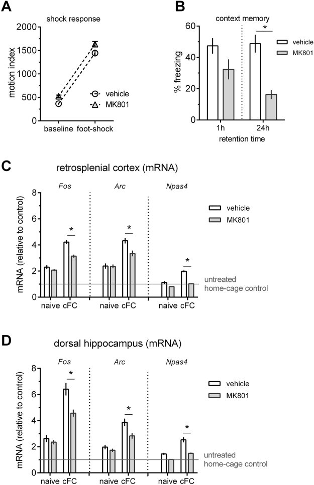 Blocking NMDA-R impairs memory and blocks IEG induction in HC and RSC. MK801 (0.1 mg/kg, i.p.) injected 30 mins before cFC training does not affect the response to foot-shock during conditioning ( A ), but it significantly impairs memory when tested 24 hrs but not 1 hr after training ( B ), n = 8 per treatment group and time-point). The same dose blocks training-induced IEG induction ( Fos , Arc and Npas4 ) in RSC (C, n = 8) and HC (D, n = 6). Mean ± s.e.m. are shown. Significant differences from vehicle control are indicated by an asterisk (*).