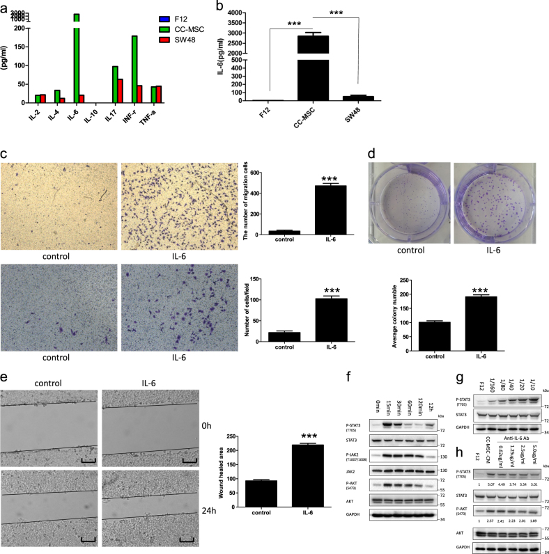 IL-6 secreted by CC-MSCs enhances the proliferation, migration and invasion of colorectal cancer cells through IL-6/JAK2/STAT3 signaling. a The levels of various factors in the cell-free culture supernatants were measured using Bio-Plex cytokine arrays. b Quantitative analysis of IL-6 levels using enzyme-linked immunosorbent assay (ELISA). The conditioned media from the cultured CC-MSCs and SW48 cells were collected to detect the levels of IL-6, and representative results from one of the three independent experiments are presented. c Transwell migration (top) and invasion (bottom) assay of SW48 cells with or without 10 ng/mL recombinant IL-6 treatment (×100). d Colony-formation assay of SW48 cells treated with or without 10 ng/mL recombinant IL-6. e Wound-healing assay of SW48 cells in the presence or absence of recombinant IL-6 (magnification, ×50; scale bar: 500 μm). *** P