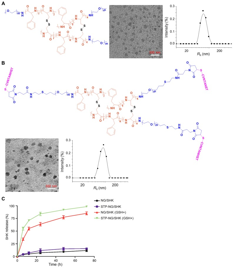 Chemical structures and characterizations of untargeted and targeted SHK nanoformulations. Morphologies and R h s of (A) NG/SHK and (B) STP-NG/SHK. (C) Release profiles of SHK from NG/SHK and STP-NG/SHK in PBS without or with 10.0 mM GSH.