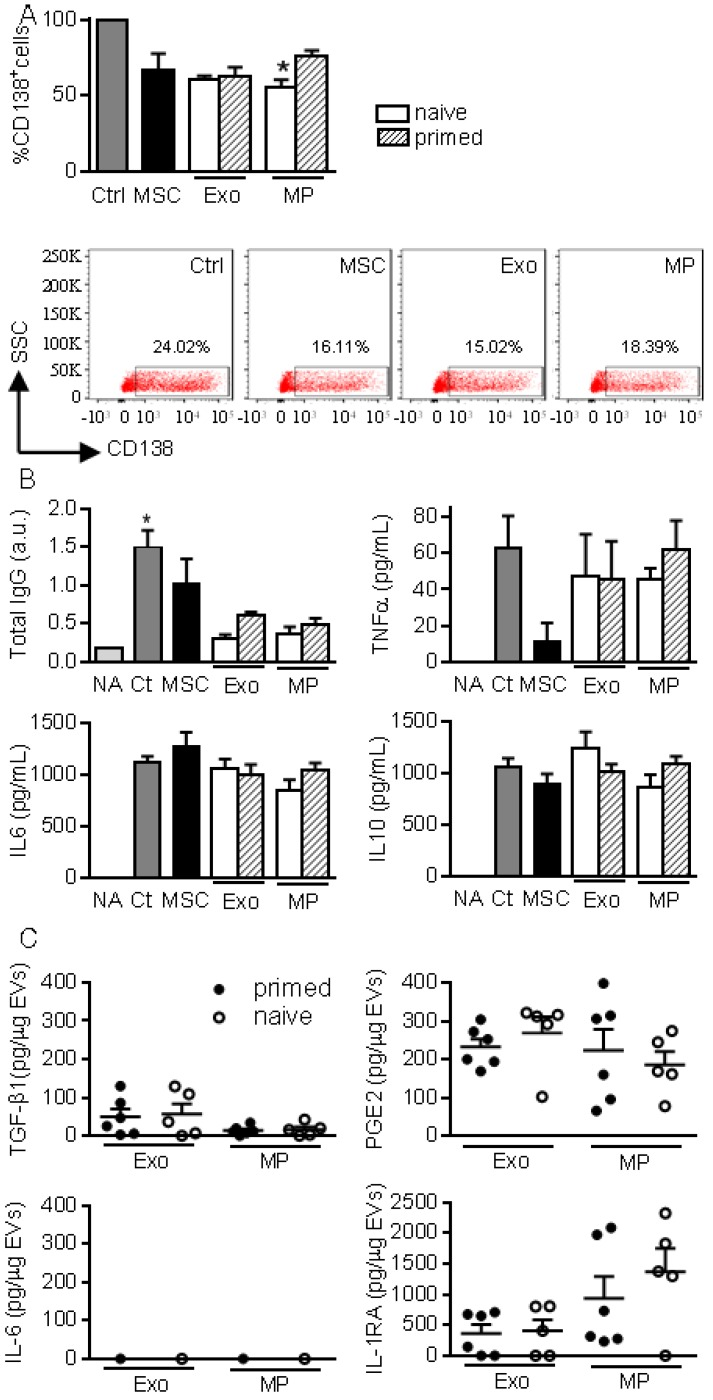 MPs and Exos exert immunosuppressive functions on B lymphocytes. (A) Percentage of CD138 + plasmablasts obtained after activation (Ctrl) or culturing with naïve MSCs or 50 ng Exos or MPs from naïve or IFN-γ primed MSCs (n=5 biological replicates). Representative flow cytometry pictures are shown below. (B) Concentration of total IgG, TNFα, IL6, IL10 in supernatants from plasmablasts in (A) as expressed in arbitrary unit (a.u.) or pg/mL (n=5 biological replicates). (C) Amounts of TGF-β1, PGE2, IL-6, IL1-RA in 1 µg of Exos or MPs as evaluated by ELISA (n=5 biological replicates). Statistical analysis used a non-parametric Kruskal-Wallis test with Dunn's multiple comparison post-test. *: p
