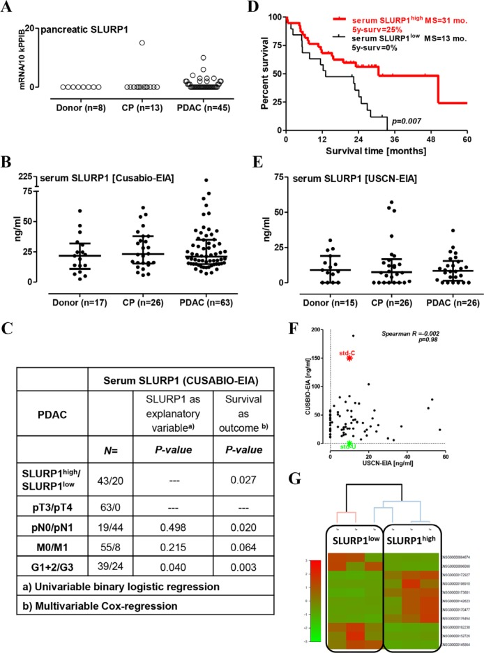 High level of circulating SLURP1 is associated with better survival in operable PDAC patients ( A ) The measurement of pancreatic SLURP1 mRNA expression with <t>qRT-PCR</t> in 66 pancreatic samples revealed the lack of expression in non-malignant pancreatic tissues and most PDAC lesions. ( B ) The concentration of SLURP1 was measured in 106 human serum samples using a commercial EIA kit produced by CUSABIO. Multiple comparison testing revealed a lack of difference between the analyzed groups ( p = 0.643). ( C ) Circulating SLURP1 levels correlated with the grade of differentiation but not with any of the TNM parameters. ( D ) Dividing the PDAC patients with resected tumors into SLURP1 high/low groups according to the preoperative level of circulating SLURP1 for the Kaplan-Meier survival analysis revealed significantly longer survival of SLURP1 high patients (cut-off = 16 ng/ml; log-rank test p = 0.007), MS: median survival. ( E ) The concentration of SLURP1 was re-measured in 67 human serum samples using a commercial EIA kit produced by USCN and confirmed the lack of difference between the analyzed groups ( p = 0.951). ( F ) Nevertheless, the USCN-EIA recognized the CUSABIO standard but not vice versa, and the USCN values for SLURP1 were three-fold lower and lacked any correlation with the CUSABIO values. Additional information is presented in Table 1 . ( G ) Clustering analysis of the RNAseq data obtained for the PDAC specimens corresponding to the serum samples with low and high SLURP1 content.