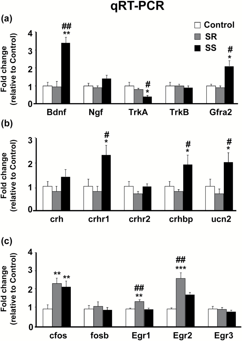 Distinct neurotrophin, neuropeptide, and immediate early genes (IEGs) expression in the dorsal striatum of shock-resistant (SR) and shock-sensitive (SS) rats. (a) Independent qRT-PCR analyses for neurotrophin mRNA levels in the dorsal striatum with increased expression of Bdnf in both SR and SS rats, decrease TrkA levels in SS rats, and increased Gfra2 levels also in SS rats. (b) Differential expression neuropeptide-related genes and receptors in the dorsal striatum, with SS rats having increased mRNA levels for crhr1 , crhbp , and unc2 compared with saline controls and SR rats. (c) Altered mRNA levels of IEGs in the dorsal striatum of SR and SS rats. Both SR and SS rats had increased expression of c-fos mRNA levels compared with saline controls, while only SR rats had increased egr1 and egr2 mRNA levels compared with saline and SS rats. Key to statistics: * P