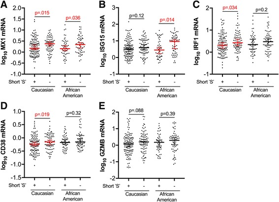 Prefrontal cortex type I interferon responses and T-lymphocyte activation marker expression trends lower in HIV-infected Caucasian and African American individuals with short 'S' HO-1 (GT)n alleles. Prefrotanal cortex RNA expression of neuroimmune markers was compared between HIV-infected subjects (without HIVE) with a short 'S' HO-1 (GT)n allele (SS, SM, SL) and those without a short 'S' allele (MM, ML, LL) in self-identifying Caucasian and African American subgroups. Neuroimmune markers analyzed were a MX1, b ISG15, c IRF1, d CD38, and e GZMB, those that significantly associated with the HO-1 (GT)n polymorphism in the full HIV+ cohort. Lines and error bars indicate median ± 95% confidence interval of log 10 transformed RNA expression data. Red median lines and errors bars denote significant differences. Differences in expression between subjects with short 'S' alleles and those without 'S' alleles in Caucasian and African American subgroups were analyzed by Mann-Whitney test