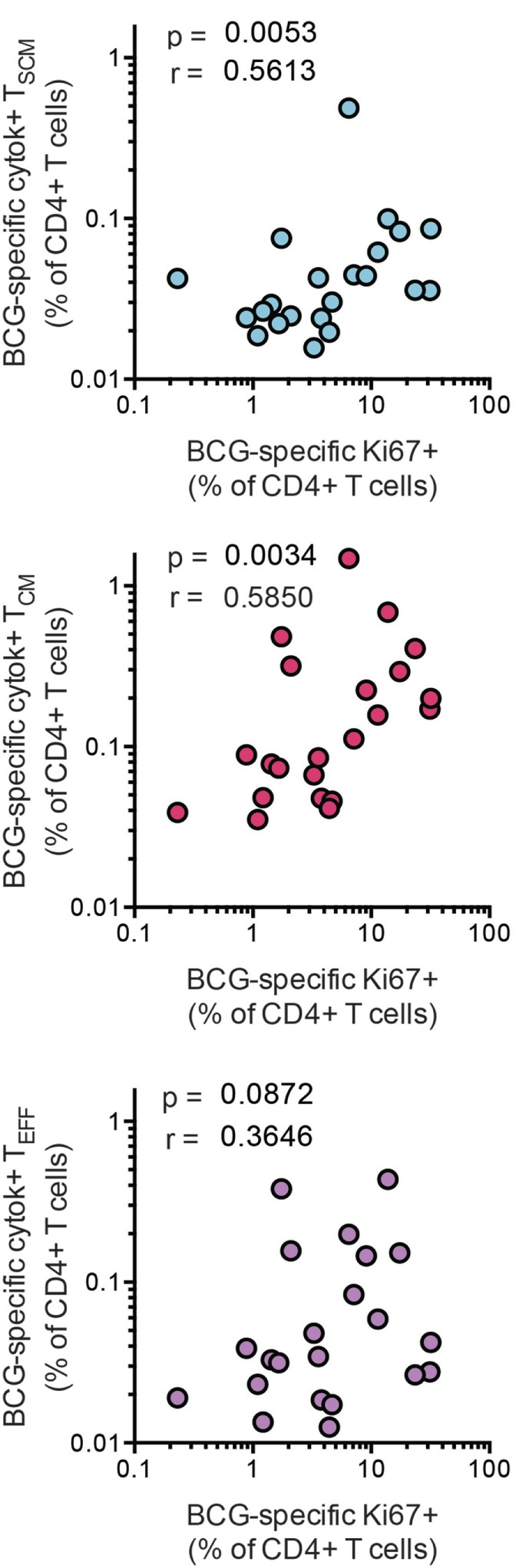Bacillus Calmette–Guerin (BCG)-specific T SCM are associated with long-term CD4 + T cell proliferation after vaccination. Whole blood from 1-year-old infants ( n = 23) was stimulated with BCG for 12 h to measure the frequencies of cytokine-producing T SCM (CD45RA + , CCR7 + ), T CM (CD45RA − , CCR7 + ), and T EFF (CD45RA − , CCR7 − ). In parallel, whole blood was stimulated with BCG for 7 days, and the frequency of proliferating CD4 + cells was assessed by upregulation of Ki-67. Correlations between the frequencies of BCG-specific CD4 + memory T cell subsets and those of proliferating CD4 + T cells were calculated by Spearman test 10 months postvaccination.