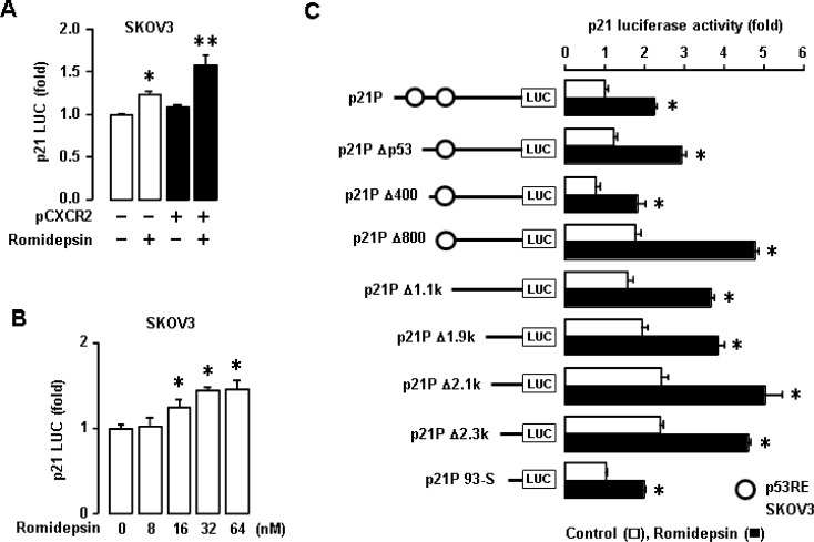 Effects of romidepsin on p21 promoter activity in p53-null SKOV-3 cells ( A ) Effects of CXCR2 on romidepsin-induced p21 promoter activity in SKOV-3 cells. ( B ) Dose-dependent effects of romidepsin on p21 luciferase activity in SKOV-3 cells. Experiments were performed in triplicate and all data are shown as mean ± S.E. * ( p ≤ 0.05) in each group by ANOVA and Tukey's pairwise comparisons. ( C ) Effects of romidepsin on p21 promoter activity in deleted constructs of p21 promoter p53 response element in p53-null SKOV-3 cells. All data are shown as mean ± SE from triplicated experiments. * indicates a statistical significance ( p ≤ 0.05) by Student's t -test.