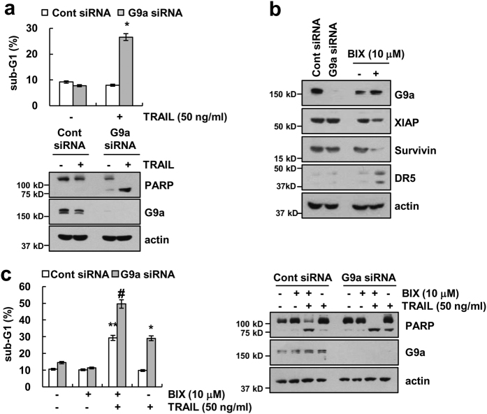 Knockdown of G9a sensitizes Caki cells to TRAIL-mediated apoptosis. a Caki cells were transiently transfected control siRNA (Cont siRNA) or G9a siRNA. Twenty-four hours after transfection, cells were treated with 50 ng/ml TRAIL for 24 h. Apoptosis was analyzed as a sub-G1 population by flow cytometry (upper panel). The protein levels of PARP, G9a, and actin were determined by western blotting. (lower panel). b Caki cells were transiently transfected control siRNA (Cont siRNA) or G9a siRNA or treated with 10 μM BIX for 24 h. The protein levels of G9a, XIAP, survivin, DR5, and actin were determined by western blotting. c Caki cells were transiently transfected control siRNA (Cont siRNA) or G9a siRNA. Twenty-four hours after transfection, cells were treated 50 ng/ml TRAIL in the presence or absence of 10 μM BIX for 24 h. Apoptosis was analyzed as a sub-G1 population by flow cytometry. The protein levels of PARP, G9a, and actin were determined by western blotting. The level of actin was used as a loading control. The values in a represent the mean ± SD from three independent samples; * p