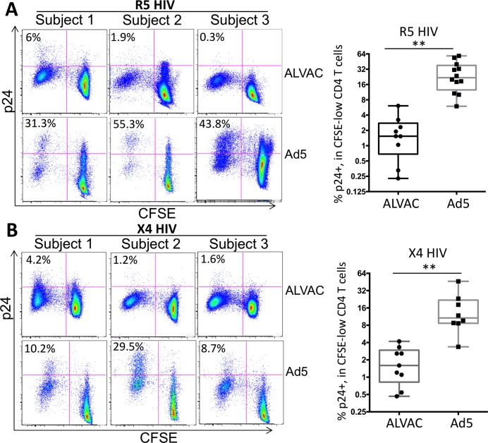 ALVAC-specific CD4 T cells are markedly less susceptible to HIV infection in vitro than Ad5 vector-specific CD4 T cells. PBMC collected from ALVAC- (RV144) or Ad5-vectored (HVTN204) HIV vaccine recipients were stained with CFSE and then re-stimulated with the recall vector antigen (ALVAC or Ad5) for three days before being infected with CCR5-tropic (US-1 strain) ( A ) or CXCR4-tropic (92/UG/029 strain) ( B ) HIV. HIV infection rate in vector-specific CD4 T cells was determined using flow cytometry to measure p24 expression 3 days post infection and expressed as the percentage of p24 + CFSE-low CD4 T cells. Representative flow cytometry plots shown at left are gated on CD3 + CD8 - CD4 T cells. Statistical analysis was performed using an unpaired Student's t test. *p ≤ 0.05, **p ≤ 0.01.