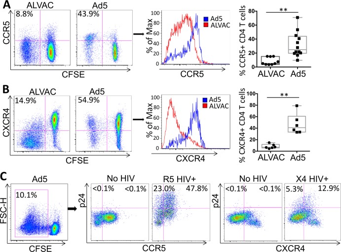 ALVAC vector-specific CD4 T cells express lower levels of the HIV co-receptors CCR5 and CXCR4 than Ad5 vector-specific CD4 T cells. PBMC of RV144 and HVTN204 vaccine recipients were stained with CFSE and stimulated with vector (ALVAC or Ad5) for 6 days. Surface expression of CCR5 ( A ) and CXCR4 ( B ) was measured by flow cytometry. Representative flow cytometry dot plots (left; gated on CD3+CD8- CD4 T cells) and histogram for co-receptor expression on ALVAC- and Ad5 vector-specific CD4 T cells are shown. Comparison of % CCR5+ or CXCR4+ vector-specific CD4 T cells from multiple subjects is shown (right). (C) HIV infection in co-receptor+ vs. co-receptor-, Ad5-specific CD4 T cells. CFSE-low, Ad5-specific CD4 T cells were gated for analysis (left). HIV infection rate (% p24+) in CCR5+ vs. CCR5- Ad5-specific CD4 T cells infected with R5 HIV (middle) or in CXCR4+ vs CXCR4- Ad5-specific CD4 T cells infected with X4 HIV (right) were shown. For both R5 and X4, no HIV infection was included as control to set p24 staining gate. Statistical analysis was performed using an unpaired Student's t test; *p ≤ 0.05, **p ≤ 0.01.