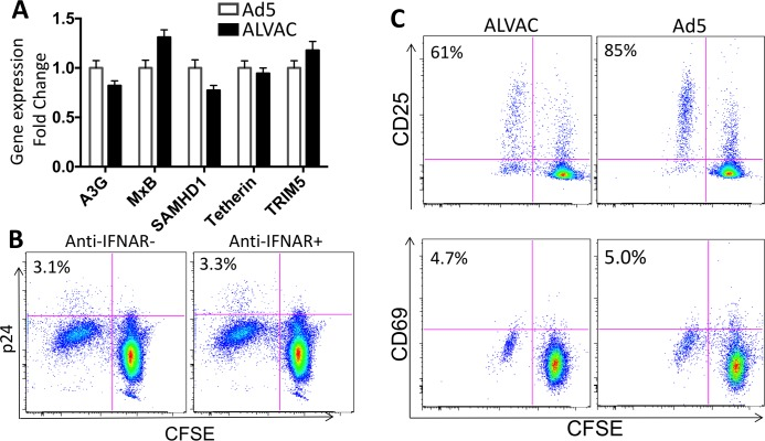 ALVAC- and Ad5-specific CD4 T cells show similar levels of innate antiviral gene expression and immune activation. (A) Relative expression of innate antiviral genes in ALVAC- and Ad5-specific CD4 T cells. RV144 and HVTN204 PBMC were CFSE-labeled and vector stimulated as described above. On day 6 ALVAC- and Ad5-specific CD4 T cells were sorted from PBMC based on CFSE-low and subjected to quantitative PCR for analysis of gene expression. The results were shown as fold change of ALVAC relative to Ad5. (B) HIV infection of ALVAC-specific CD4 T cells in RV144 PBMC in the presence or absence of anti-human IFNAR antibody blockade (gated on CD3+CD8- CD4 T cells). Number in each plot shows %p24+ in CFSE-low CD4 T cells. (C) Surface expression of T-cell activation markers CD25 (top) and CD69 (bottom) on ALVAC- vs. Ad5-specific CD4 T cells 6 days after stimulation with the corresponding vector (gated on CD3+CD8- CD4 T cells). Number in each plot shows % CD25+ or % CD69+ in CFSE-low CD4 T cells.