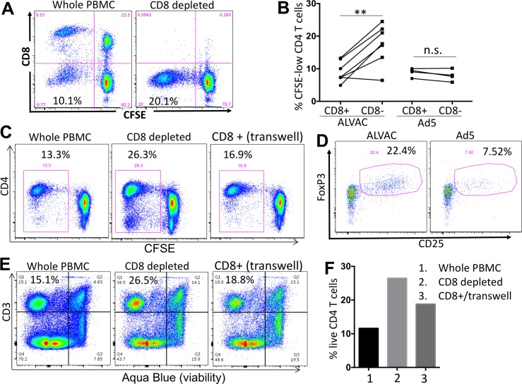 ALVAC-induced CD8 T cells inhibit the expansion of autologous vector-specific CD4 T cells. (A) CD8+ cells were depleted from PBMC of vaccine recipients using magnetic beads. CD8-depleted or whole PBMC were CFSE stained and re-stimulated with the appropriate vector for 6 days. Efficient CD8 depletion was verified by flow cytometry. Number in the bottom-left quadrant shows % CFSE-low, proliferating CD4 T cells in total CD4 T cells. (B) Comparison for vector-specific CD4 T cell proliferation (% CFSE-low) in PBMC with or without CD8 depletion (n = 7 for ALVAC; n = 4 for Ad5). (C) CD4 T-cell proliferation in RV144 PBMC 6 days after stimulation with ALVAC. Comparison of whole PBMC, CD8-depleted PBMC, and PBMC from which CD8 T cells were depleted and then added back to culture in trans-well (gated on CD3+ T cells). (D) CD25 and FoxP3 expression in ALVAC- versus Ad5-specific CD8 T cells 6 days after stimulation with the corresponding vector (gated on CD3+CD8+ CFSE-low T cells). (E) Flow cytometry plot and (F) bar graph showing CD4 T cell viability (% viable cells) in RV144 PBMC 3 days after stimulation with ALVAC (before significant T-cell proliferation occurs), as determined by Aqua Blue dye exclusion. Comparison of cell viability in whole PBMC, CD8-depleted PBMC, and PBMC from which CD8 T cells were depleted then added back to culture in trans-well. Statistical analysis was performed using an unpaired Student's t test; n = 2 (Ad5) or 7 (ALVAC). n.s.: non-significant; *p ≤ 0.05, **p ≤ 0.01.