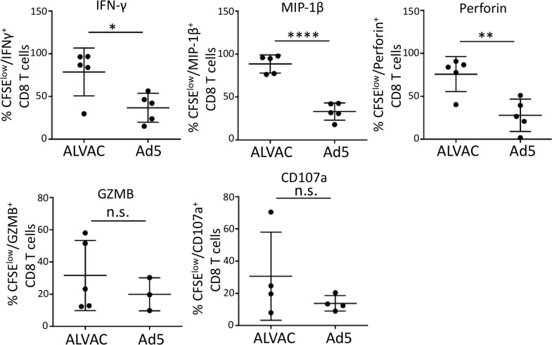 ALVAC-induced CD8 T cells manifest stronger antiviral and cytotoxic phenotype than Ad5 vector-induced CD8 T cells. PBMC of vaccine recipients were stained with CFSE and then stimulated with vector antigen for 6 days, followed by brief PMA/Ionomycin re-stimulation (6 hours) for cytokine/effector molecule re-synthesis. Intracellular staining and flow cytometry were used to measure the production of IFN-γ, MIP-1β, perforin, granzyme B (GZMB), and CD107a; results are expressed as % cytokine+ in CFSE-low CD8 T cells. Statistical analysis was performed using an unpaired Student's t test; n = 3–5. n.s.: not significant; *p ≤ 0.05, **p ≤ 0.01, ***p ≤ 0.001, ****p ≤ 0.0001.