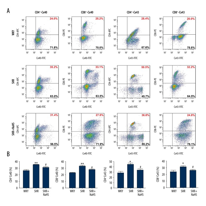 Effect of long-term NaHS treatment on surface expressions of Cx40 and Cx43 in different T lymphocyte subtypes of SHR. A, Representative flow cytometry plots are presented for Cx40 and Cx43 expression levels on gated single-positive CD4 + T lymphocytes or CD8 + T lymphocyte populations in the peripheral blood from 15 SHR and 15 WKY rats. Fresh, resting PBMCs from SHR and WKY rats underwent surface staining with antibodies against CD3, CD4, and CD8 molecules. After surface staining, the cells were fixed, permeabilized, and stained with unlabeled anti-Cx40 or anti-Cx43 plus FITC-labeled secondary antibodies. Based on the CD4 + or CD8 + gate, the cells were further gated based on Cx40 and Cx43 expression levels, and the frequency of CD4 + or CD8 + T cells expressing Cx40 and Cx43 was determined. B, Bar graph shown are the percentage of CD4 + or CD8 + T cell population expressing Cx40 and Cx43. Both Cx40 and Cx43 expression levels are significantly increased in CD4 + or CD8 + T cells of SHR compared with those of WKY rats. Long-term NaHS treatment inhibited the expressions of Cx40 and Cx43 in CD4 + and CD8 + T cells from the peripheral blood of SHR, and their expressions in SHR returned to the levels seen in WKY rats. Values are mean ± SEM. * P