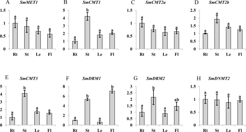 Transcript abundance of SmMET1 (A), SmCMT1 (B), SmCMT2a (C), SmCMT2b (D), SmCMT3 (E), SmDRM1 (F), SmDRM2 (G), and SmDNMT2 (H) in roots (Rt), Stems (St), leaves (Le) and flowers (Fl) of S. miltiorrhiza . Transcript level was analyzed using quantitative real time RT-PCR. SmUBQ10 was used as a reference. qRT-PCR was performed in triplicates for each independent biological replicate. Transcript levels in roots were arbitrarily set to 1 and the levels in other tissues were given relative to this. One-way ANOVA was performed using IBM SPSS 20 software. P