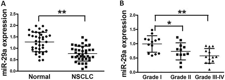 MicroRNA-29a is significantly downregulated in lung cancer tissues. A, Relative miR-29a expression levels were analyzed by quantitative RT-PCR in 38 pairs of human lung cancer tissues and adjacent normal tissues. U6 RNA level was used as an internal control. B, All samples were histologically classified by a clinical pathologist. Relative expression levels of miR-29a in different stages of cancer tissues. Data represent mean ± SD of 3 replicates. *Significant difference at P