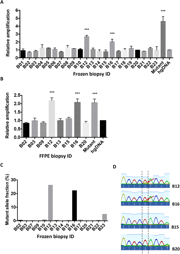 PIK3CA H1047R mutation status analysis in cancer biopsies and FFPE samples. ( A , B ) 10 ng of genomic DNA isolated from frozen core biopsies of a total of 22 cancer patients ( A ) or 10 ng of genomic DNA extracted from FFPE sections of 8 patients ( B) were subjected to qPCR analysis for PIK3CA H1047R mutation. Each assay gave significantly elevated results in the same two samples (patients B12 and B16) in both assays. Data are shown as mean mutant fold change amplification relative to internal control amplification ±SEM. A sample containing a pool of DNA obtained from cell lines carrying the mutation was included in the assay as a positive control. All the experimental points were obtained in triplicates in three independent experiments (n = 3). ***P
