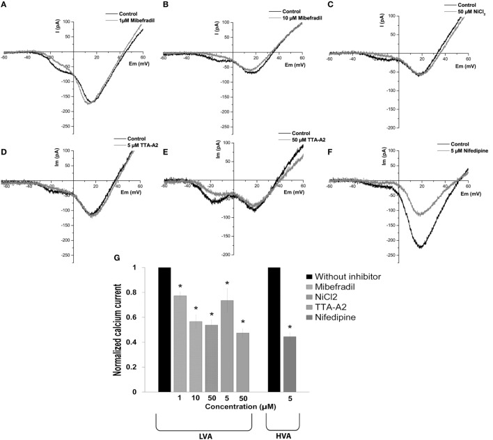 Effect of calcium channel inhibitors on low-voltage-activated (LVA) and high-voltage-activated (HVA) calcium currents in adult beta cells. (A–F) Representative recordings of global calcium currents observed in adult beta cells before and after of calcium channel inhibitors: mibefradil (1 and 10 µM), NiCl 2 (50 µM), TTA-A 2 (5 and 50 µM), and nifedipine (5 µM), respectively. Protocol: voltage ramp from −80 to +60 mV, 500 ms duration, and 0.5 mV/ms slope. (G) Normalized calcium current after of calcium channel inhibitors: 1 µM mibefradil ( n = 5), 10 µM mibefradil ( n = 6), NiCl 2 ( n = 6), 5 µM TTA-A 2 ( n = 5), 50 µM TTA-A 2 ( n = 3), and nifedipine ( n = 6). * p ≤ 0.05 denotes significant differences compared with cells without inhibitors, paired t -test.