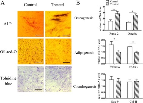 Impact of radial shockwaves on multidifferentiation of MSCs. a Multidifferentiation tests of MSCs showed radial shockwave stimulation increased ALP activity but decreased formation of Oil Red-O-positive lipid droplets, indicating that shockwaves promote osteogenesis induction and block adipogenesis at the same time. No significant differences in the two cohorts of cells after chondrogenic induction. b Impact of shockwaves on MSC differentiation also reflected by mRNA levels of Runx-2 , Osterix , CEBP/α , PPARγ , Sox-9 , and Col-II . Quantitative PCR assay performed at least three times independently; representative result shown. *Statistically significant difference compared with control groups, P