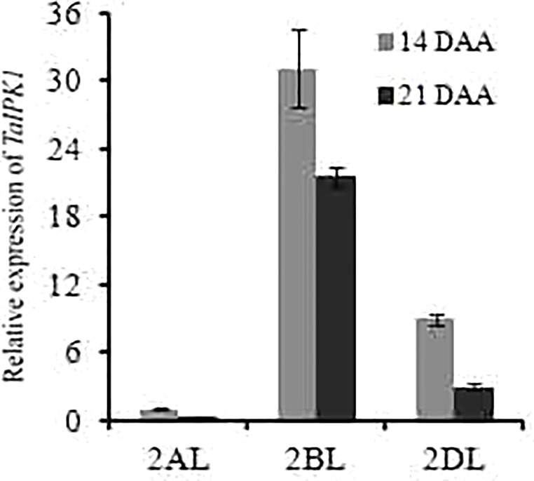 Differential expression analysis of three homoeologs of TaIPK1 at two seed developmental stages (14 and 21 DAA). Transcript specific primers were designed for 2AL, 2BL, 2DL of TaIPK1 homoeologs based on genomic information available at IWGSC. gDNA free cDNA was prepared using 2 μg of RNA. qRT-PCR assays were performed using SYBR green and C t values were normalized against wheat ADP-ribosylation factor 1 ( ARF1 ) as an internal control. The indicated error bars represents the standard deviation from three independent replicates.