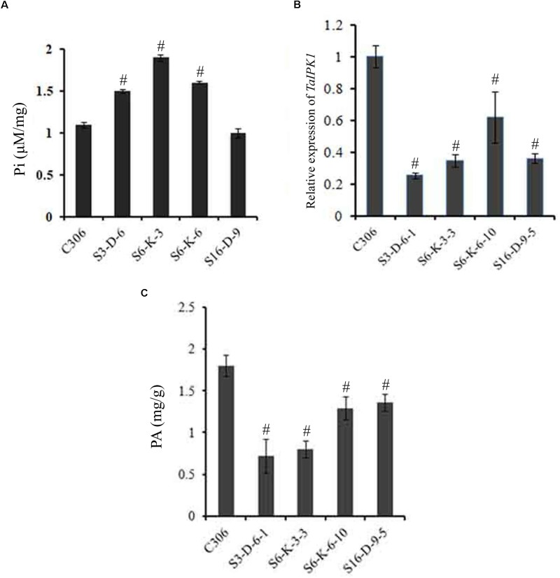 Confirmation of silencing in TaIPK1 : RNAi lines in T 4 seeds. (A) Free Pi content of control C306 and TaIPK1 :RNAi lines were estimated using colorimetric based assays. (B) Relative fold change of TaIPK1 expression in wheat transgenic lines. RNAi lines from three independent events were subjected to expression analysis at 14 DAA stage. The cDNA templates were prepared from 2 μg of DNase free RNA. <t>qRT-PCR</t> assays were performed using <t>SYBR</t> green and C t values were normalized against wheat ADP-ribosylation factor 1 ( ARF1 ) as an internal control. (C) Total phytic acid in mature wheat grains of transgenic lines (T 4 ). PA was measured in the mature seeds collected from the primary tiller of each line. # Indicates significant differences at p