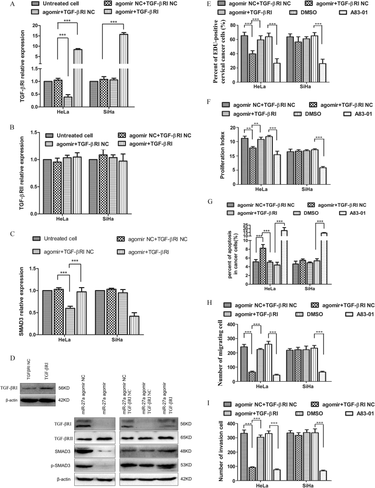 miR-27a functions as a tumor suppressor through repressing TGF-βRI expression and TGF-β signaling. a – c qRT-PCR analysis of TGF-βRI, TGF-βRII, and SMAD3 expression in cervical cancer cells that were transfected with miR-27a agomir in combination with TGF-βRI expression vector or control vector. d Western blot analysis of TGF-βRI, TGF-βRII, SMAD3, and p-SMAD3 levels in cervical cancer cells that were transfected with miR-27a agomir in combination with TGF-βRI expression vector or control vector. A83-01, a TGF-β signaling inhibitor, serves as positive control. DMSO is solvent control of A83-01 treatment. e – i The co-transfection of miR-27a agomir and TGF-βRI expression vector relieves the tumor inhibition effects mediated by miR-27a agomir. e EdU assays. f CFSE proliferation assays. g Invasion assays. h Migration assays. i Flow cytometry apoptosis assays. *** P